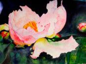 Anita Jamieson's watercolor Emerging Peony