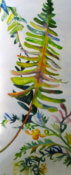 Anita Jamieson's watercolor Fronds